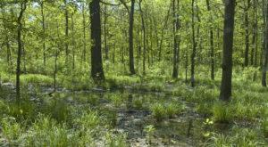 flatwoods-pond