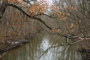 North Branch Chicago River